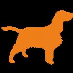 Orange Spaniel