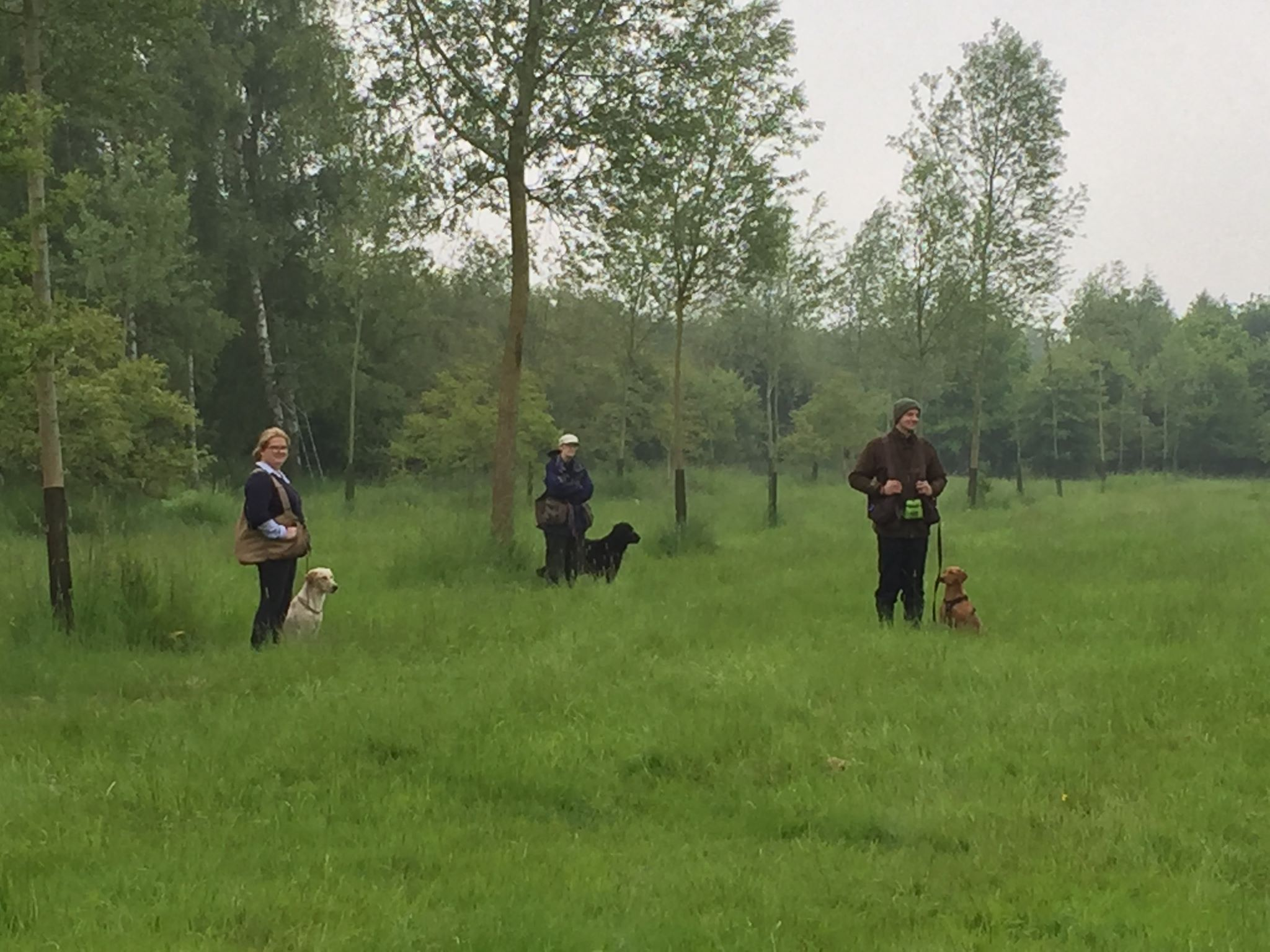 Standlake Retriever training - session 1 walking to heel2