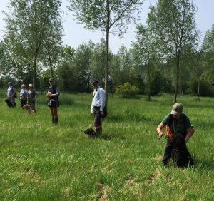 Standlake Retriever training - session 2 the line up