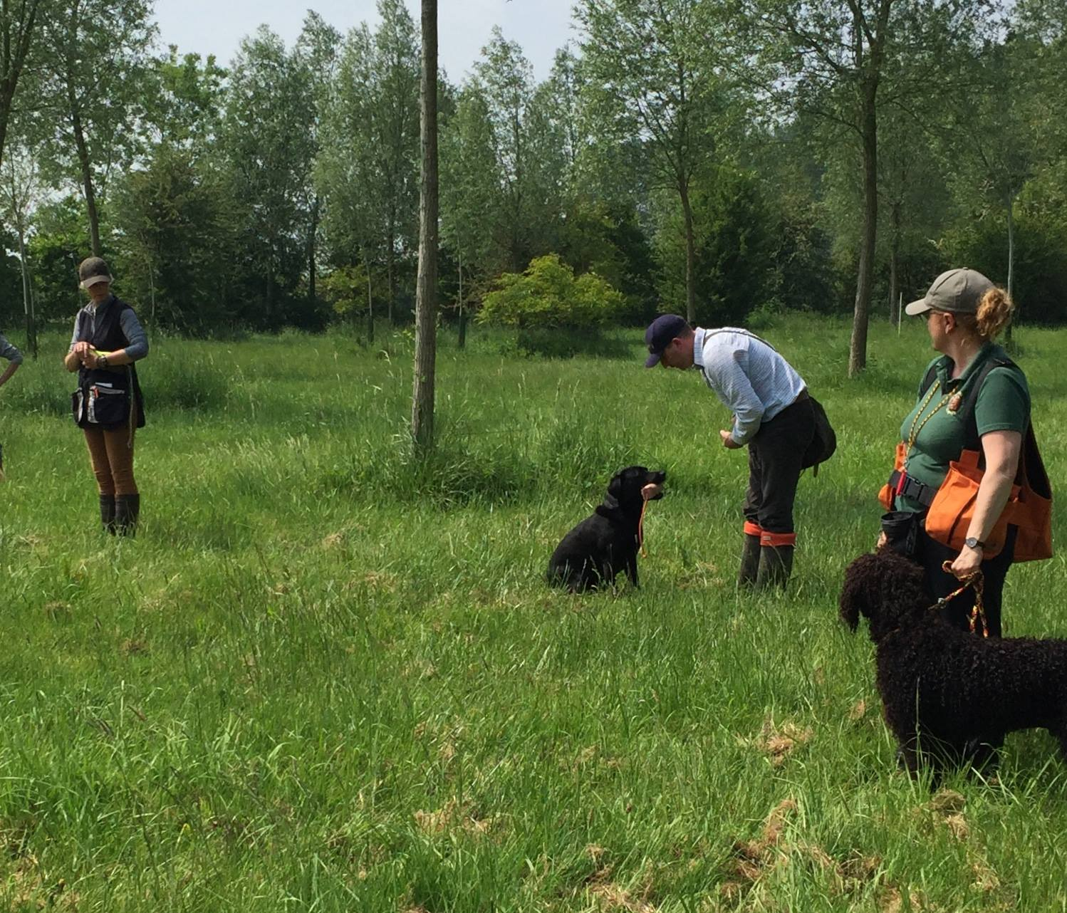 Standlake Retriever training - session 2 the walk up retrieved